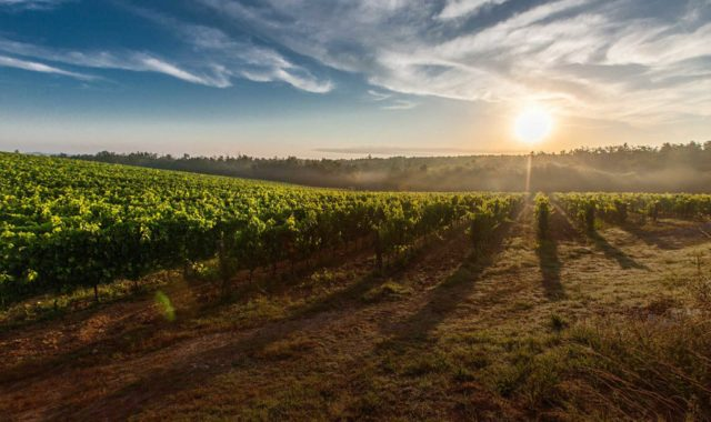 day-trip-roma-siena-wine-testing-tours